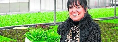 Cómo cultivar miles de lechugas en una piscina - El Diario Montanes   Cultivos Hidropónicos   Scoop.it