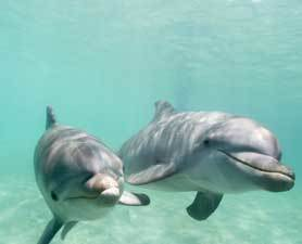 Dolphins May Be Math Geniuses : Discovery News | The LEMON 07_19_12 | Scoop.it