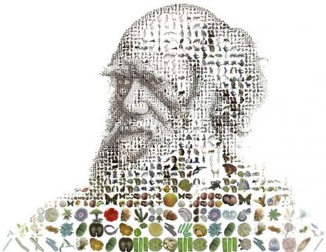 Évolution : et si nous descendions du hasard ? - Sciences pour tous | Sciences Pour Tous | Scoop.it