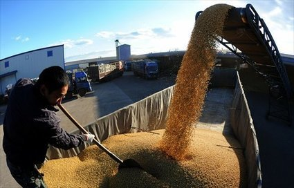 Many farmers in Northeast China grow GM soybeans despite official ban - Global Times (2015) | Ag Biotech News | Scoop.it