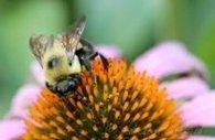 Risques sur la santé des colonies d'abeilles | Seniors | Scoop.it