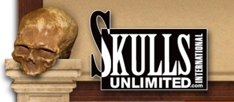 Weird Commerce: Skulls Unlimited, A Living Company From Animal Remains | Strange days indeed... | Scoop.it