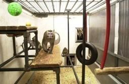 Demand That Harvard Medical Send Primate Test-Subjects to Sanctuaries | Animals R Us | Scoop.it