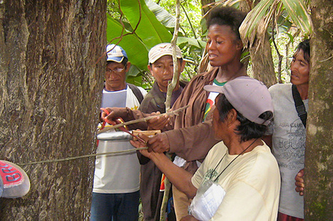 Stanford scientists team with indigenous people to produce detailed carbon calculations of Amazon rainforest | Rainforest EXPLORER:  News & Notes | Scoop.it