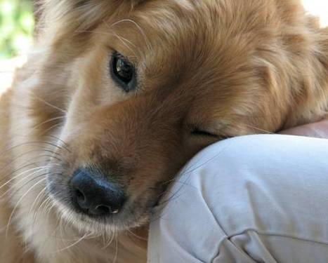 Pets promote social behavior in autistic children | Dream Killer | Scoop.it