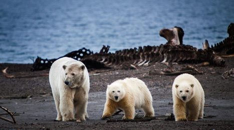 Bear Town USA   sustainability and resilience   Scoop.it