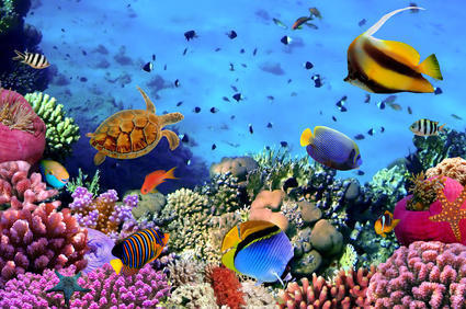 At least one-third of marine species remain undescribed | Amazing Science | Scoop.it