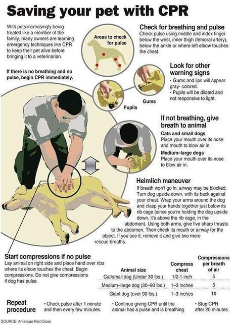 Twitter / planetepics: Saving your pet with CPR ... | CPR, BLS, ACLS Instruction | Scoop.it