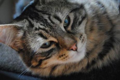 Nord : le chat sauve sa famille d'une intoxication mortelle | Chronique d'un pays où il ne se passe rien... ou presque ! | Scoop.it