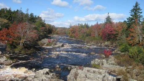 Groups use lime to help restore salmon to river - TheChronicleHerald.ca | Nova Scotia Fishing | Scoop.it