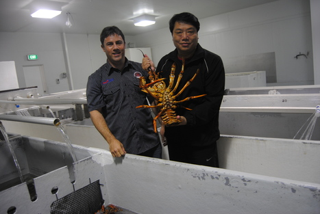 AUSTRALIA: Chinese demand for local seafood | INDIA EXPORTS AND IMPORTS | Scoop.it