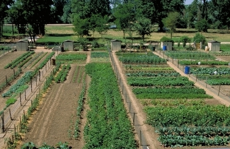 INRA - Jardins associatifs : lorsque la ville nourrit la ville | INNOVATION, AVENIR & TERRITOIRE(S) | Scoop.it