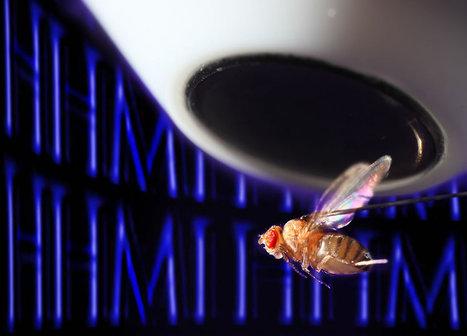 D'énigmatiques neurones aident les mouches à s'orienter [en anglais] | Le flux d'Infogreen.lu | Scoop.it