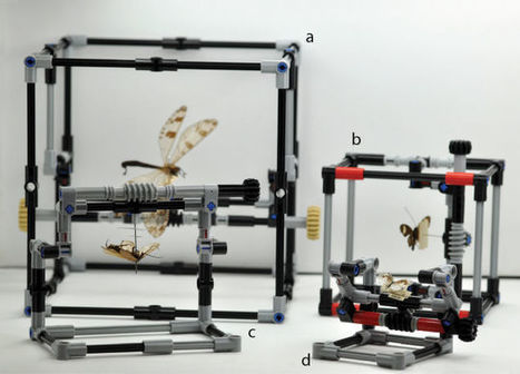 Researchers in London Are Using Legos On Its Bug Specimens - io9 | playful learning | Scoop.it