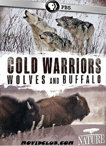 MOVID CLUB: COLD WARRIORS : WOLVES AND BUFFALO - DOCUMENTARY   FUN 4 FREE   Scoop.it