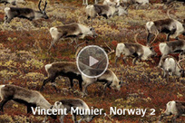 Videos - Nature photography - images from the Wild Wonders of Europe.   All about nature   Scoop.it