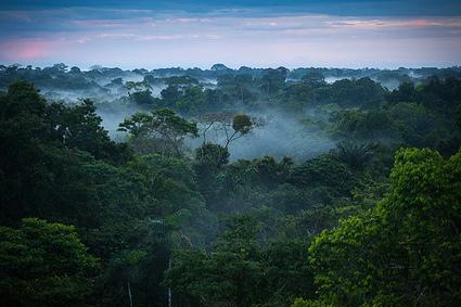 Gambar Hutan Hutan Tropis Amazon Yang Cantik - Sebarkan Ilmu   Pemanasan Global   Scoop.it