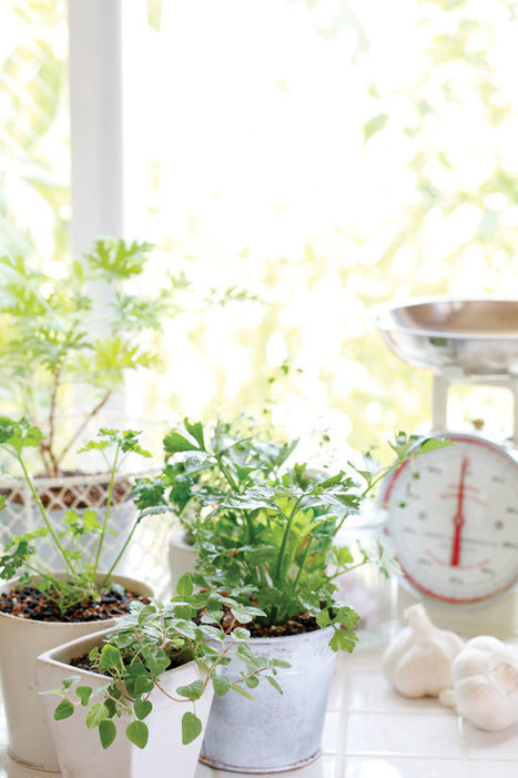 An Indoor Winter Herb Garden | Gardening | Scoop.it