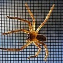 In First Test, U.S. Military's SPIDERS Microgrid Uses 90% Renewable Energy | Sustain Our Earth | Scoop.it