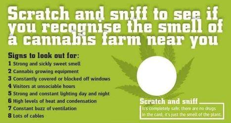 Pour mieux dénoncer leurs voisins, les Anglais apprennent l'odeur du cannabis   Art, Culture et Société   Scoop.it