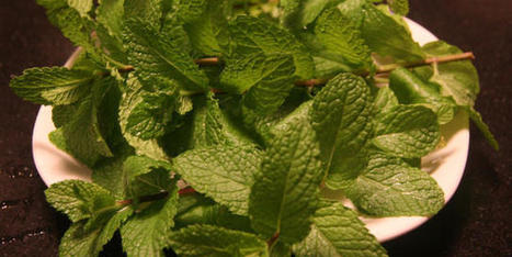 Use Up Leftover Herbs in Simple Syrup, Pancakes, Fritters, and More   Bazaar   Scoop.it
