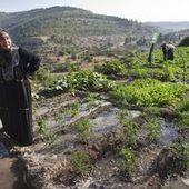 L'ONU condamne les destructions de maisons palestiniennes par Israël | Géopolitique du Moyen Orient | Scoop.it