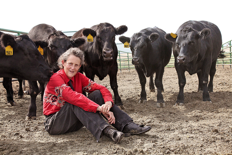 Exploring Temple Grandin's Brain | DiscoverMagazine.com | Neuro-Minded | Scoop.it