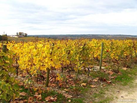 Contre la libéralisation des vignes, la France gagne encore un allié | Agriculture | L'Europe avec EurActiv France | Crakks | Scoop.it