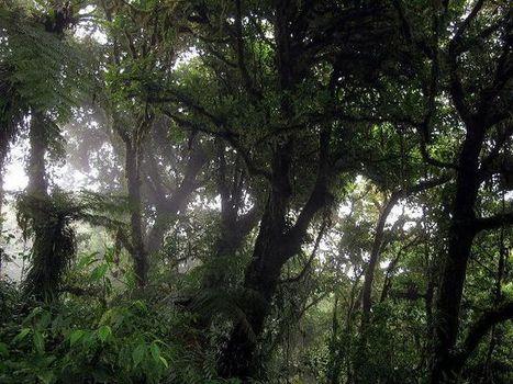 ¿Practicas el turismo sostenible? | Green Euskadi | Scoop.it