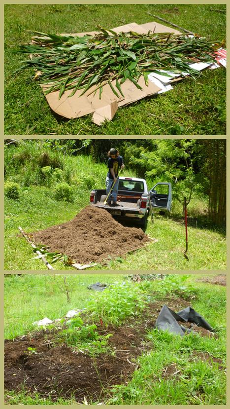 No-Till Lasagna Bed Gardening -- Easy, Peasy | Gardens and Gardening | Scoop.it