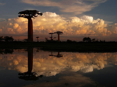 65 fotos que inspiran un viaje a Madagascar | Viaja Maja! | Scoop.it