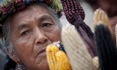 Monsanto earnings fall 34% after a year of global protests | Peer2Politics | Scoop.it