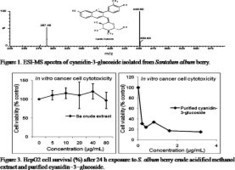 Cyanidin-3-glucoside, nutritionally important constituents and in vitro antioxidant activities of Santalum album L. Berries | Santalum album [Indian Sandalwood] | Scoop.it