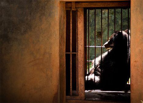 Photographer Captures the Suffering of Zoo Animals Worldwide - Ecorazzi | Animal Problems | Scoop.it