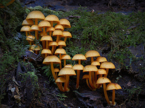 New Wondrous Photos of the World's Beautifully Diverse Fungi | Le It e Amo ✪ | Scoop.it