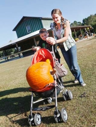How to pick the perfect pumpkin | Jacksonville Daily News | North Carolina Agriculture | Scoop.it