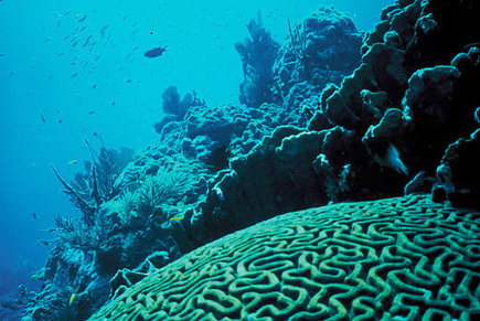 The World's Coral Reefs Face Serious Problems by 2100   Climate Central   All about water, the oceans, environmental issues   Scoop.it