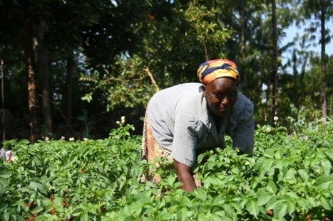 Technology helps Africa's women farmers close the gap | Tech in agriculture | Scoop.it