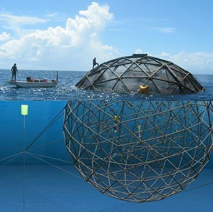 L'Aquapod, un étonnant concept de fermes marines en haute mer | Innovation du coala | Scoop.it