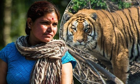 Taking on the tiger poachers: How the WWF is helping Nepalese women to give the endangered big cats their future back   Tiger Conservation   Scoop.it