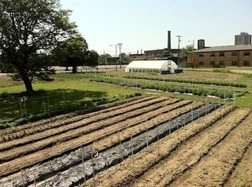 WWOOFing on urban farms in Cleveland — City Farmer News | Vertical Farm - Food Factory | Scoop.it