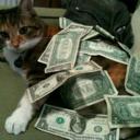 ca$hcats.biz | Les chats c'est pas que des connards | Scoop.it