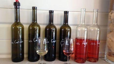 Vin de Liège: le public va pouvoir découvrir les premiers vins | Route des vins | Scoop.it