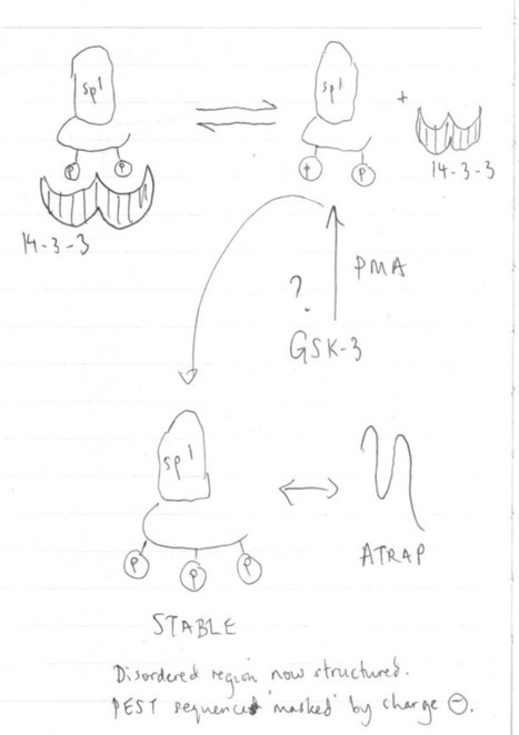 Thinking Through Drawing » Painting, Drawing and Molecular Biology | Drawing to Learn. Drawing to Share. | Scoop.it