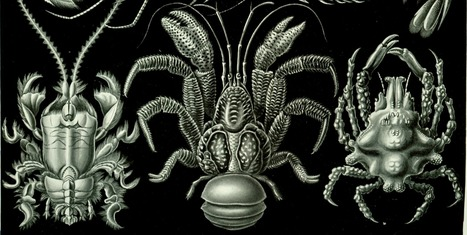 Fossil Crabs, Reefs Hint at the Future of Earth's Seas | Paleontology News | Scoop.it