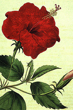 CBHL Home Page - Welcome [Council on Botanical and Horticultural Libraries] | Garden Libraries | Scoop.it