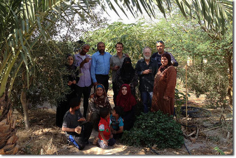 A Tree Management Course at the Jordan Valley Permaculture Project Site (aka 'Greening the Desert – the Sequel') | Sustainable Futures | Scoop.it