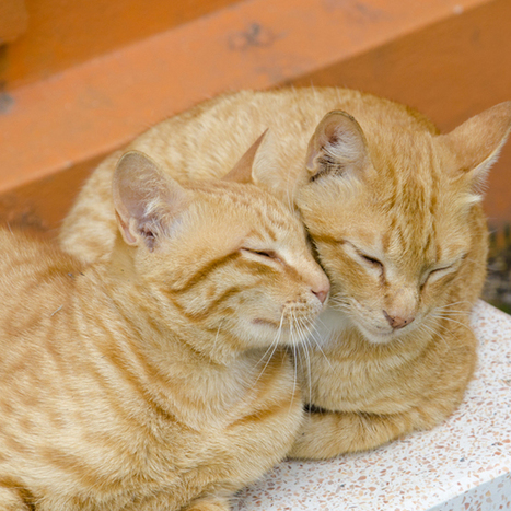 5 Facts About Cats and Sleep | Cats Meow | Scoop.it