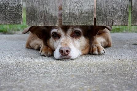 Save a Life: November is National Adopt a Senior Pet Month | Minnesota Pet News | Scoop.it