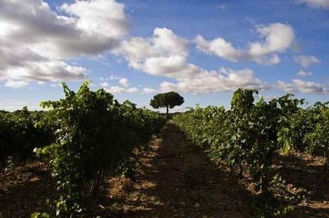 Las Rutas del Vino inician sus intercambios enoturísticos | Enotourism Spain - enoturismo España | Scoop.it